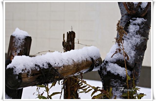ナチュラル雪のツリー