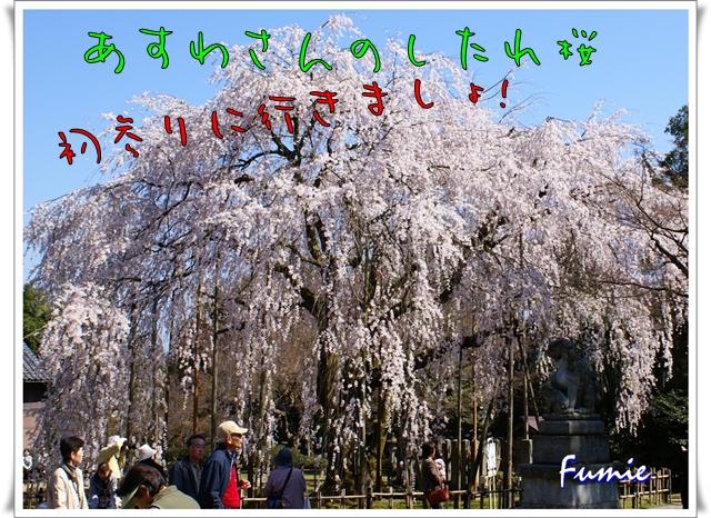 あすわさんの枝垂れ桜